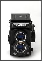Highlight for Album: Seagull