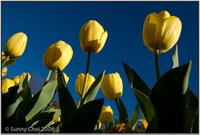 Highlight for Album: 2006-09 Canberra Floriade