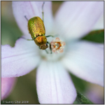 SC312286w.jpg
