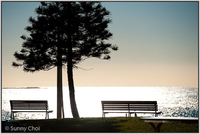 Highlight for Album: 2010-08 Sunrise at Dee Why Beach